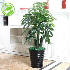 decorative plants for office. Decorative Plants For Office Superior Fake Tree Stump Small Potted Artificial View Living . B