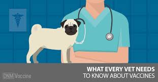 Pug Dog Vaccination Chart What Every Vet And Dog Owner Should Know About Vaccines