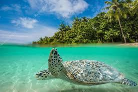 sea turtle underwater in beautiful