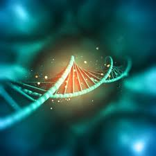 In genetics, dominant genes are those that are always expressed if they are found in an organism. Codominance Definition Examples And Practice Problems Biology Junction