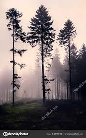 Seizoengebonden Karakter Witte Afbeelding Landschap Met Eenzame