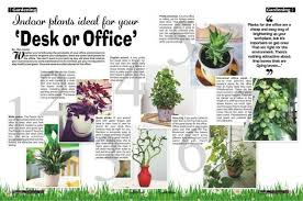 feng shui plant office. Nice Plants For Office Desk Feng Shui Ideas Plant F