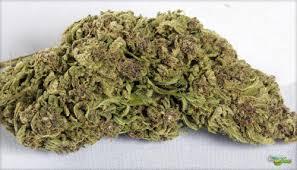 Jah Goo Marijuana Strain Review