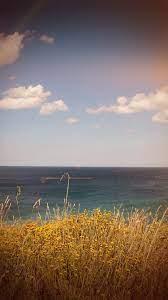 mt66-sea-cloud-flower-nature-old ...