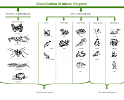 Classification Of Animal Kingdom Non Chordates And Chordates