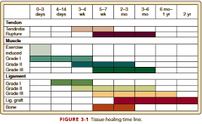 Muscle Recovery Time Chart How Long Will This Take Time Frames Of Tissue Healing