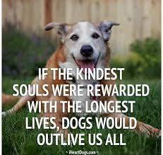Rescue Dog Quotes Extraordinary So True Animals Pinterest Dog Animal And Doggies