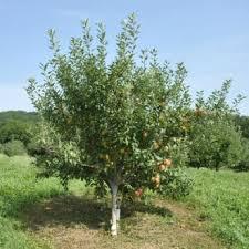 Kansas Fruit Growers AssociationFruit Trees In Kansas