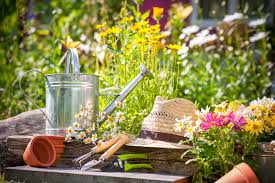 gardening is one of the best activity or hobby towards reducing your carbon emissions gardeners who grow fruits or vegetables no matter how pathetic the