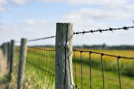 wood farm fence. Old Style, Rustic Wood Post Barb Wire Fence Protecting Corn Field In The Midwest United Farm S