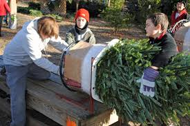 Christmas Trees Archives  Page 5 Of 7  Minnesota GrownLocal Christmas Tree Lots