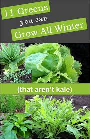 11 greens you can grow all winter including pea greens or shoots mizuna