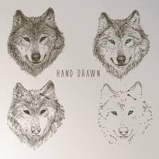 Drawn Wolf Wolf Vectors Photos And Psd Files Free Download