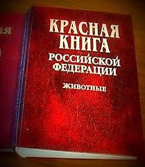 Редкие животные занесенные в Красную книгу Дроплак ру Редкие животные занесенные в Красную книгу