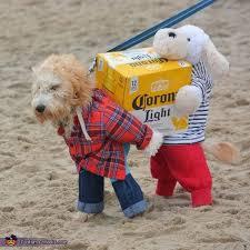 25 Best Dog Costumes Ideas On Pinterest Dog Halloween