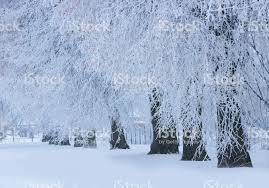Winter nature backgrounds Windows 10 Beautiful Winter Nature Backgroundwinter Landscape Royaltyfree Stock Photo Istock Trees In Frostbeautiful Winter Nature Backgroundwinter Landscape