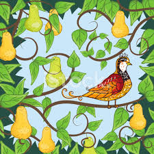 Image result for partridge in a pear tree