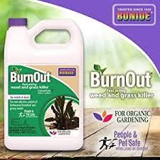A few organic herbicides target only broadleaf weeds, leaving grass safe. The Best Organic Weed Killers For Your Garden Lawn