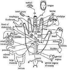 Reflexology Chart Vagus Nerve Hand Reflexology Research Scientific Reports