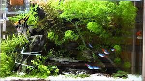 Freshwater tropical aquarium 2016 10 11