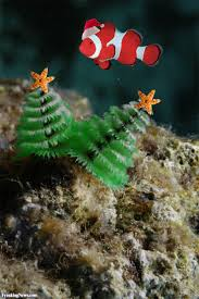 The Oceanu0027s Weirdest Creatures  National Geographic KidsChristmas Tree Worm Facts