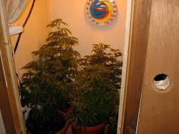 basement grow room design. Basement Grow Room Design I