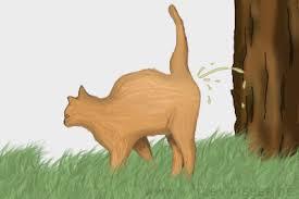 Die maus sitzt im papierkorb. Unsauberkeit Bei Katzen Ursachen Behandlung