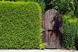 Best 25 Ficus Pumila Ideas On Pinterest  Vines Ivy Wall And IvyWall Climbing Plants Southern California