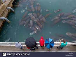 Florida Power And Light Manatee Viewing Riviera Florida Usa 27th Jan 2019 Spectators Watch As A