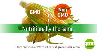 gmo and non gmo foods no difference do gmos cause allergies rest easy because the scientific and academic munity concluded that genetically