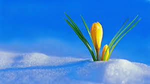 Pin on Winter flowers