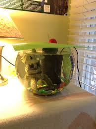 Betta Art Decorative Fish Bowl The Consequences of Fish Bowls by BluuWynter on DeviantArt 39