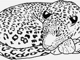 Animals Coloring Pages Photo Cheetah Easy Copy Lyi On Animal