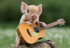 Cute Pigs Desktop Backgrounds ...
