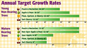 When How To Fertilizer Your Fruit Trees Organic