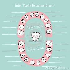 Baby Tooth Chart Record Baby Teething Chart Tooth Chart