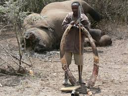Image result for animals poachers