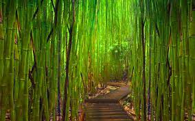 Green bamboo forest #6929053