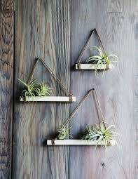 Easy DIY air plant trapezes