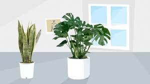 best house plants uk brighten your