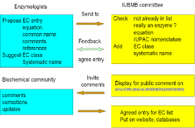 Enzyme Chart Flow Chart For Classification Of An Enzyme Download