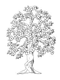 Picture Of Tree To Color Free Printable Tree Coloring Pages Tree