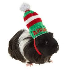 Bah Humbug Hat With Lights Merry And Bright Bah Humbug Small Pet Hat Red Green