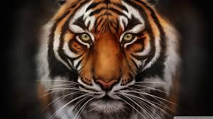 tiger wallpaper desktop. Exellent Desktop Save The Tiger Wallpaper 1920x1080 238461 To Tiger Wallpaper Desktop W