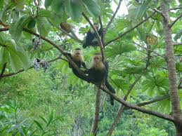 real jungle animals monkeys. Simple Animals In  Intended Real Jungle Animals Monkeys