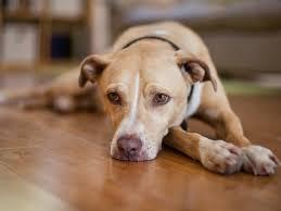 So Rührend Nimmt Ein Hund Abschied Liebenswert