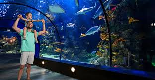 moody gardens aquarium or rainforest adventures