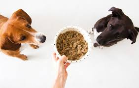 how to choose a legitimately healthy and safe natural dog food