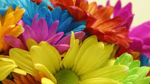 Colorful-Flowers-Wallpapers-HD-free ...