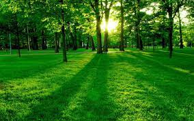 The 10 Nature Green Color HD Wallpapers ...